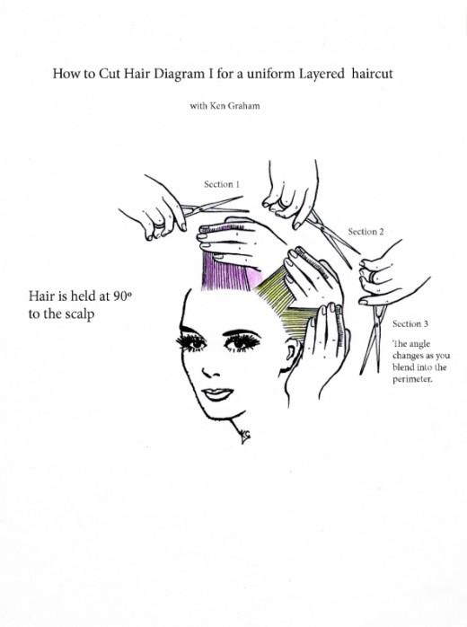 diagram for a uniform layered hair cut more hair styles how to cut