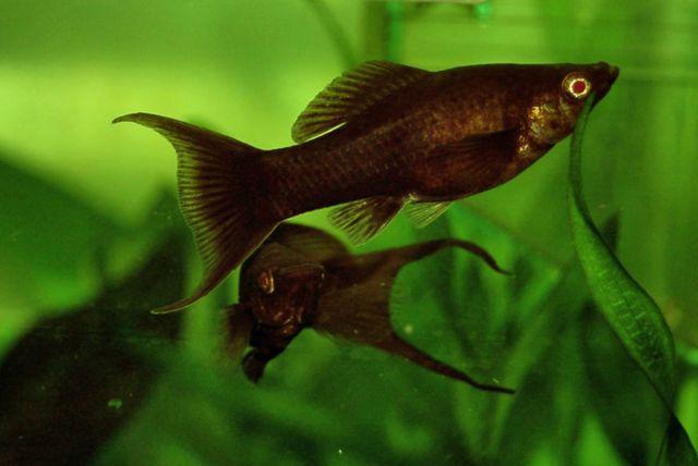 Controlling Algae With Algae Eating Tropical Fish