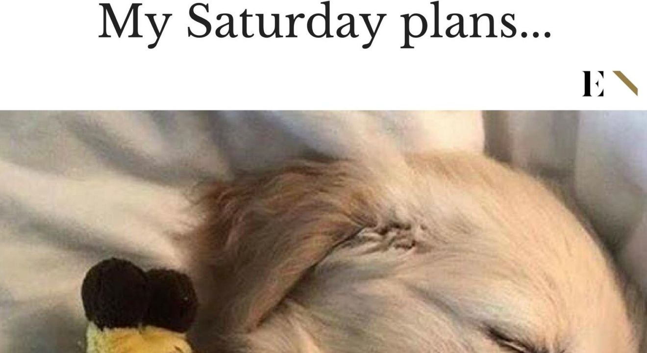 14 Funny Memes That Will Leave You On The Floor Laughing