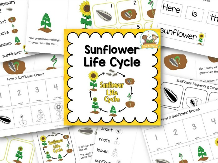 Sunflower Life Cycle - Pre-K Pages