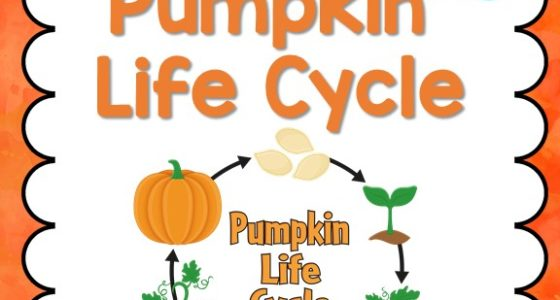 Pumpkin Life Cycle - Pre-K Pages