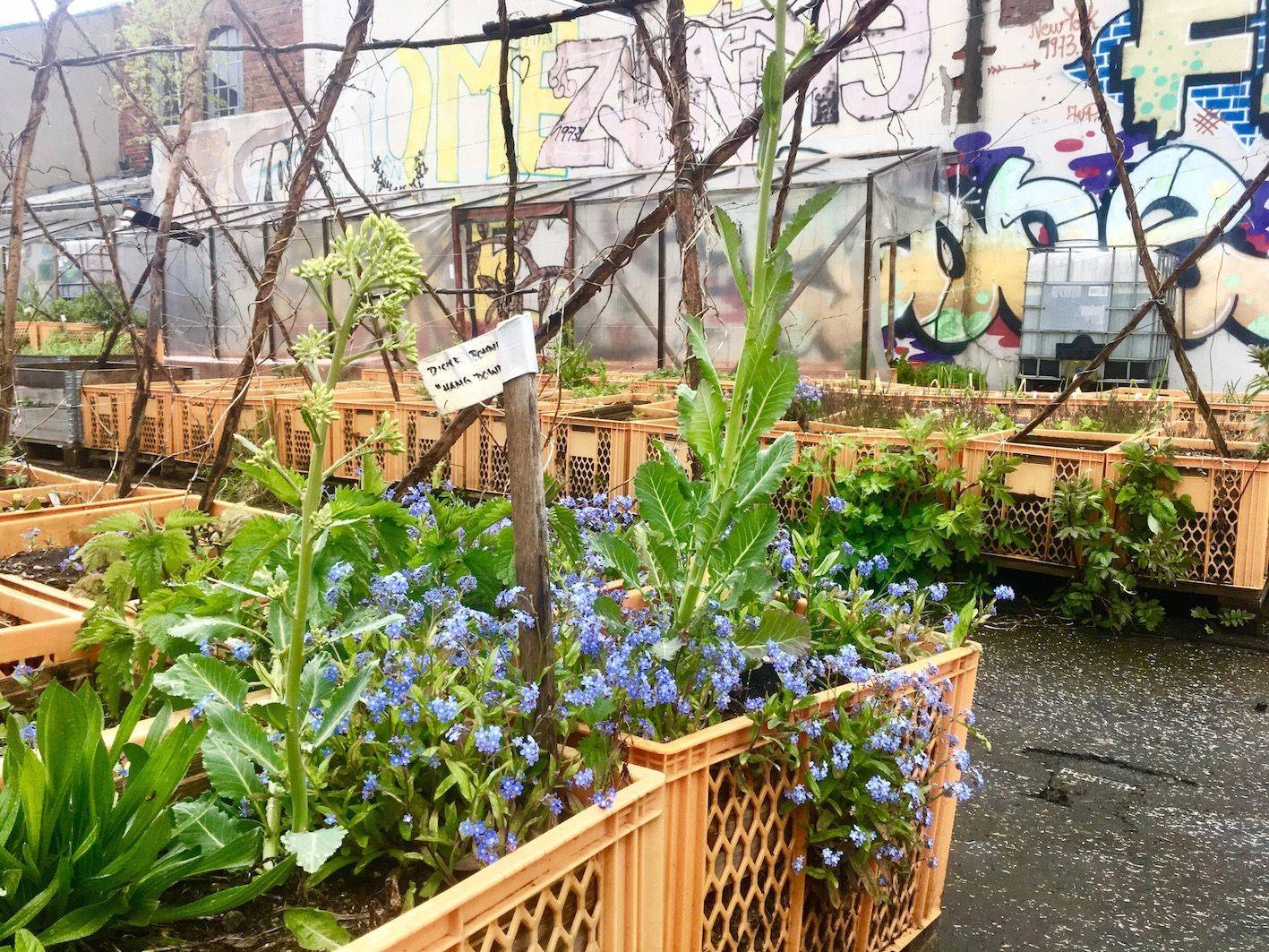 Monster World Garten My Garden In The City Urban Gardening Is The Latest Trend