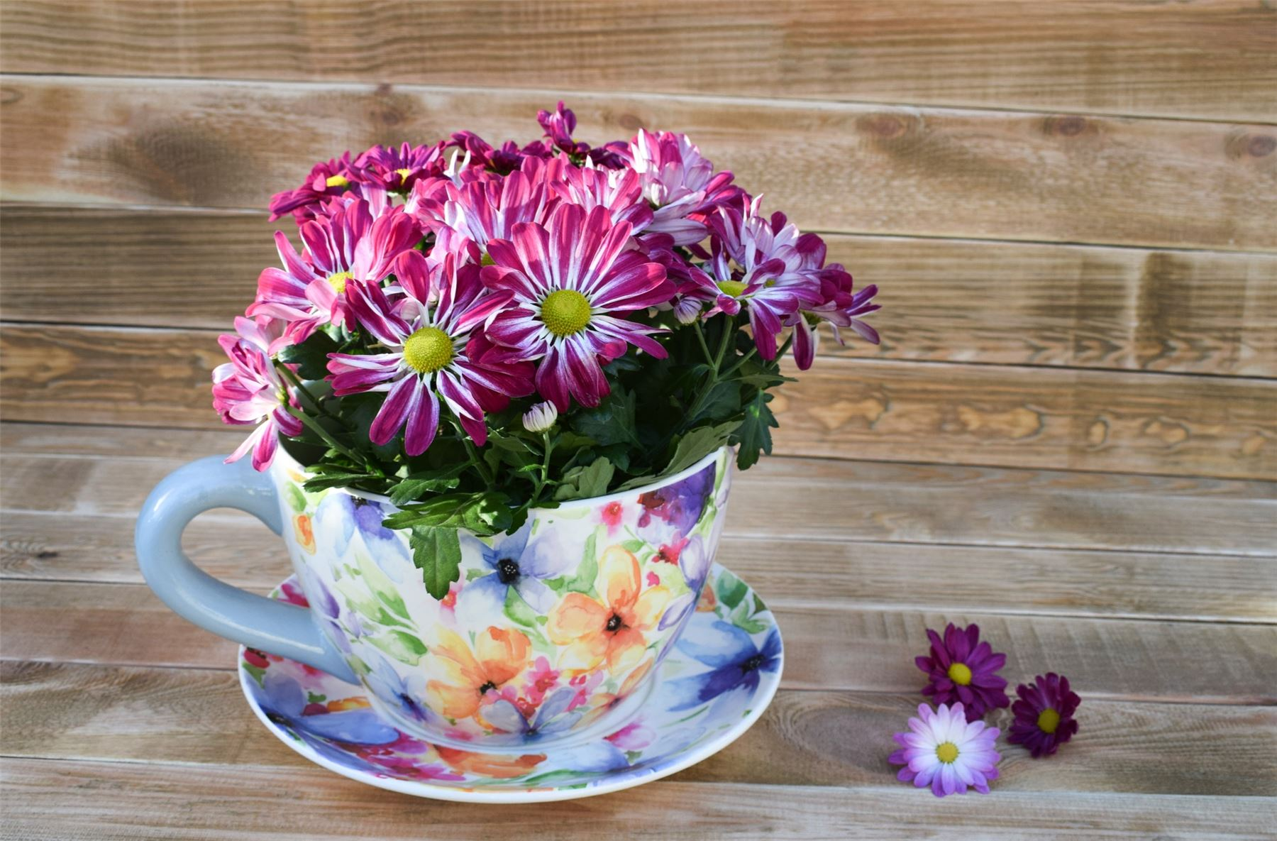 Large Tea Cup Planter Details About Large Teacup Planter Plant Pot Flower Floral Coastal Designs 25cm Ivyline
