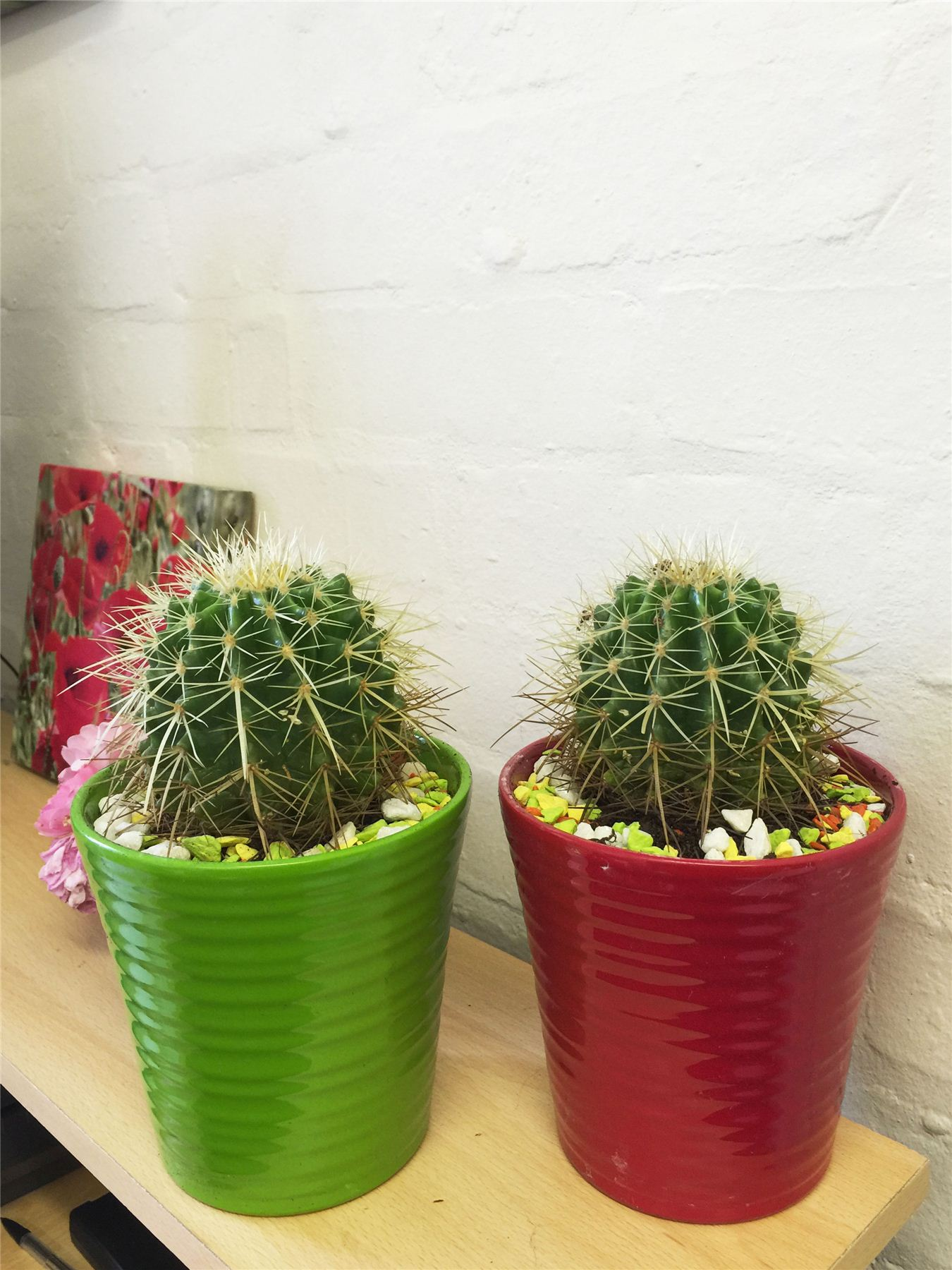 Ceramic Pots For Plants Indoor 1 Large Cactus Evergreen Indoor Office Plant In Ceramic