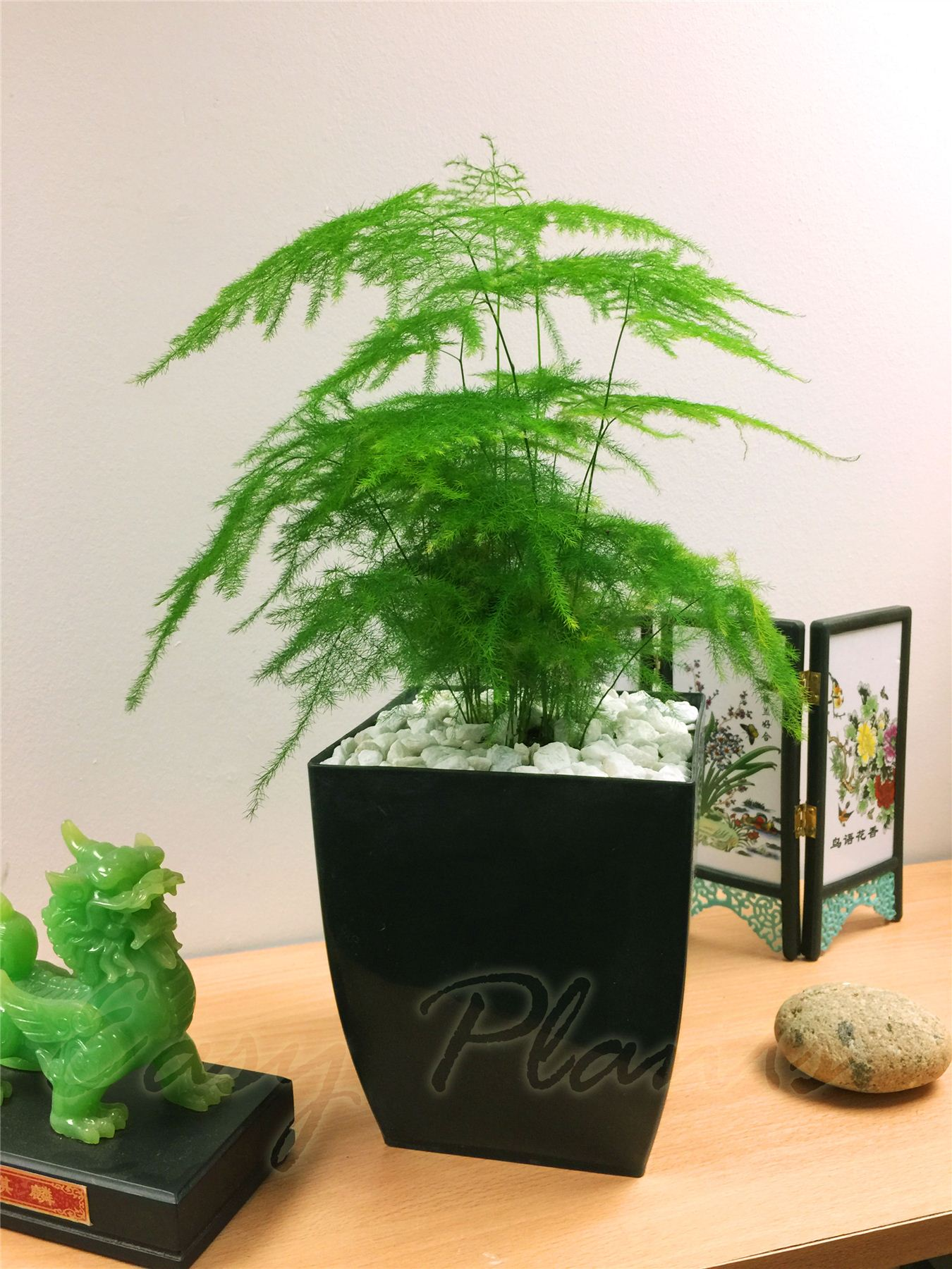 In House Plant Office House Plant In Square Milano Gloss Black Pvc Pot
