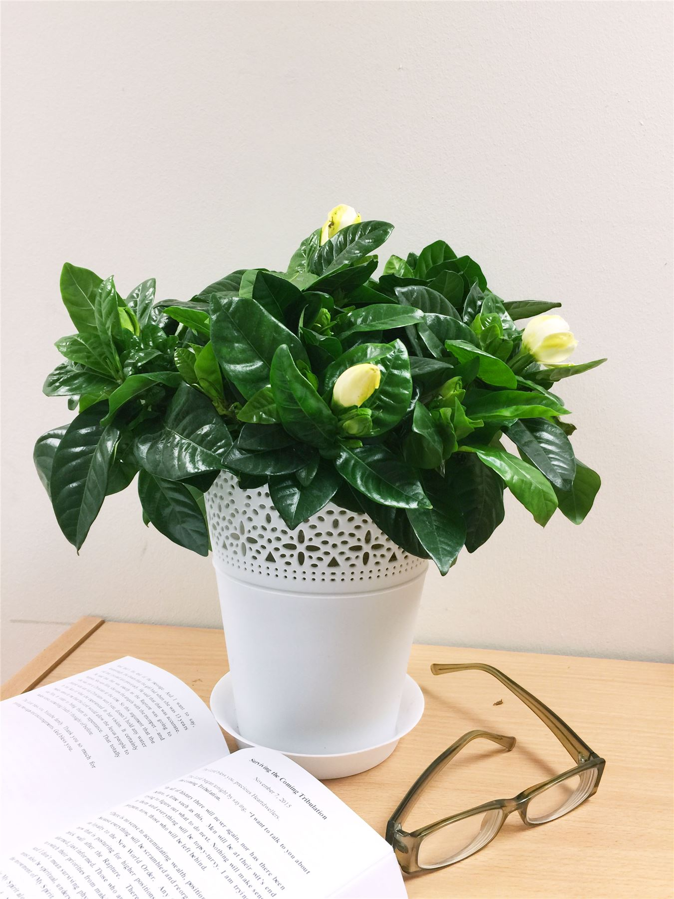 Blumen Im Topf Details Zu Evergreen House Plant In 14cm Matt White Floral Pot Office Garden Conservatory