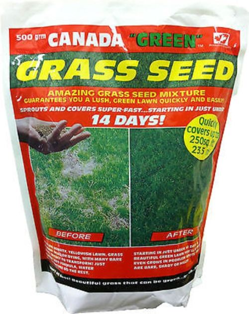 Medium Of Canada Green Grass