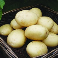 Potato Patio Refill Kit - Spring Planting from Mr ...
