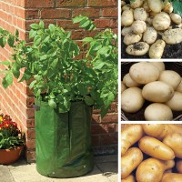 Potato Patio Kit - Spring Planting from Mr Fothergill's ...