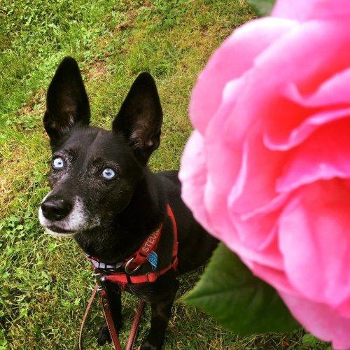 Medium Of Seattle Craigslist Pets