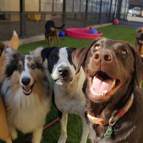 Medium Of Houston Pets Alive