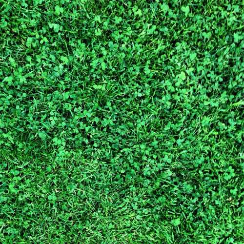 Medium Crop Of Canada Green Grass Seed