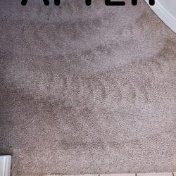 Carpet Genie 65 Photos 219 Reviews Carpet Cleaning