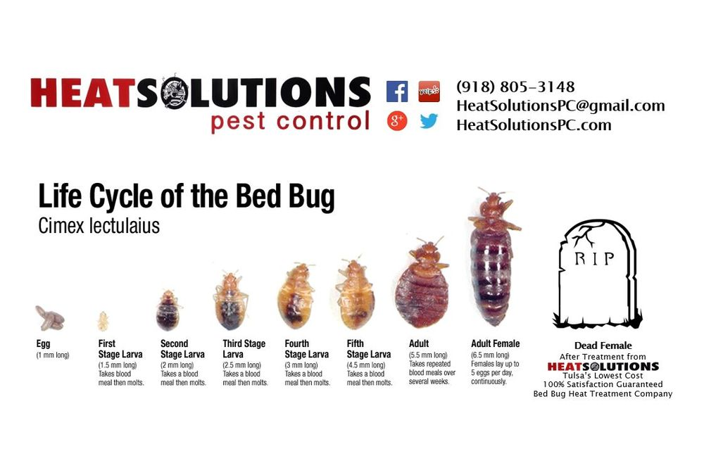 The Heat Solutions Pest Control Bed Bug Life Cycle Tulsa\u0027s most