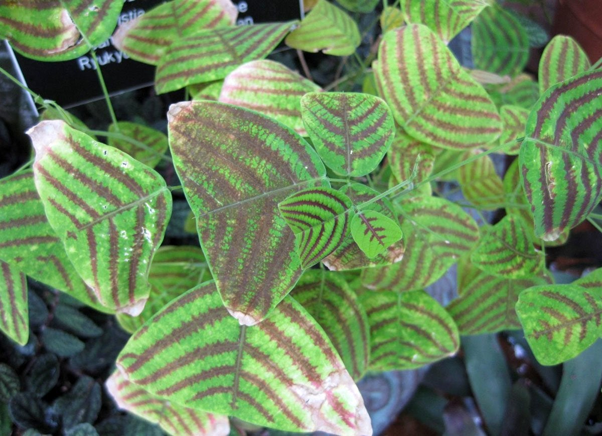 Unusual House Plants For Sale 8 Exotic Houseplants You Ve Never Heard Of Bob Vila