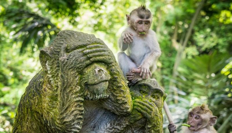 Large Of Jungle Friends Primate Sanctuary