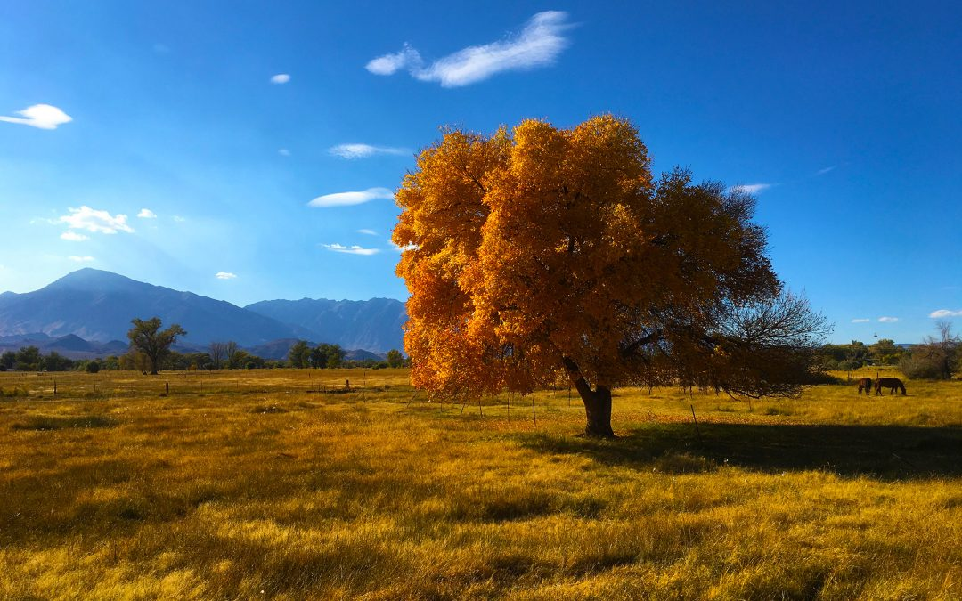 Fabulous Fall Fun in the Eastern Sierra Bishop Visitor Information