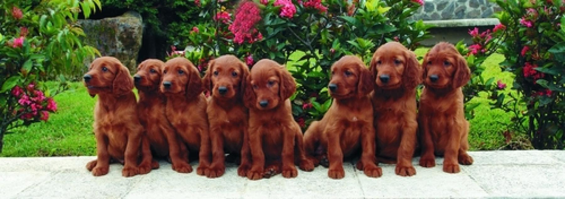 Sterling Find Random Irish Dog Names On Our Dog Name Irish Dog Names Your Lucky Pup Dog Name Generator Buzzfeed Dog Kennel Name Generator bark post Dog Name Generator