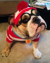 Woof! Announcing the Winners of Our Dog Costume Contest ...