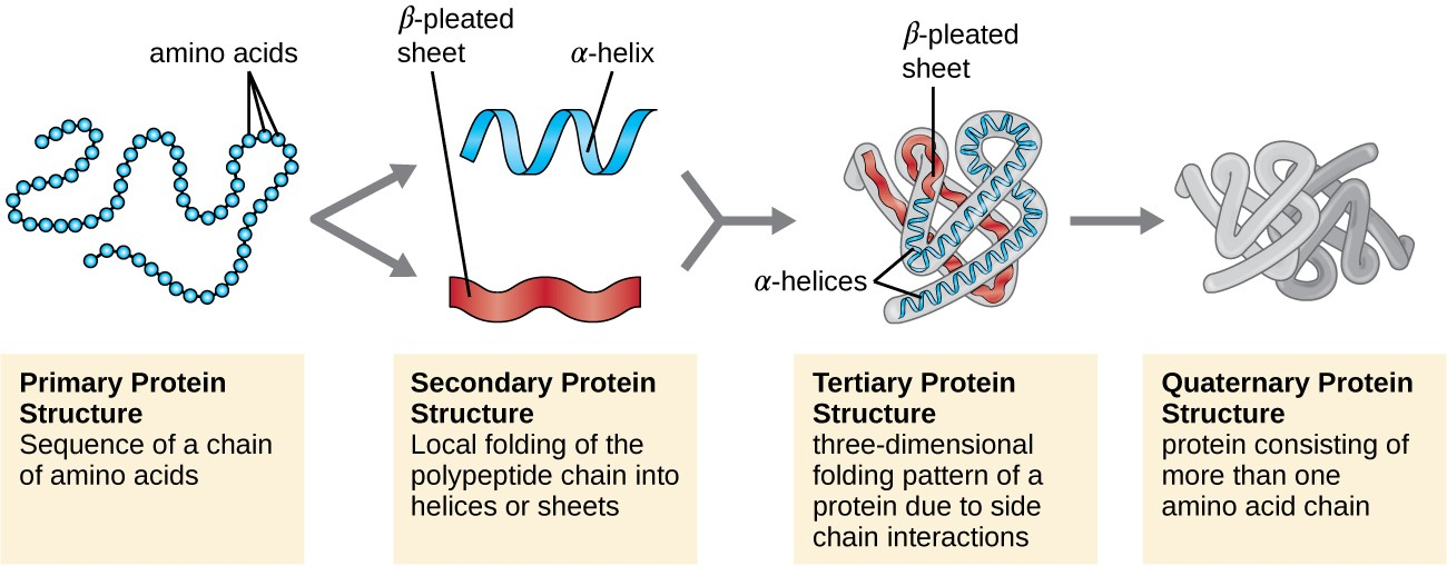 Protein Diagram Wiring Diagram