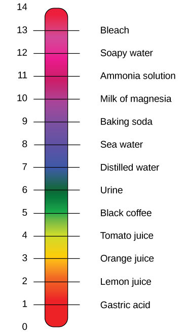 The pH Scale Biology for Majors I
