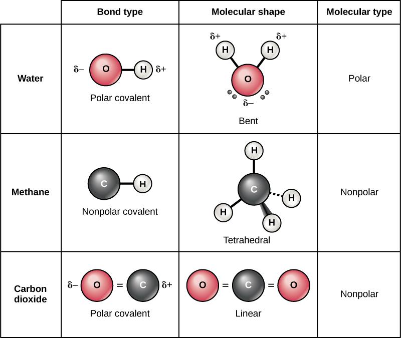 Covalent Bonds Biology for Majors I - carbon bonds