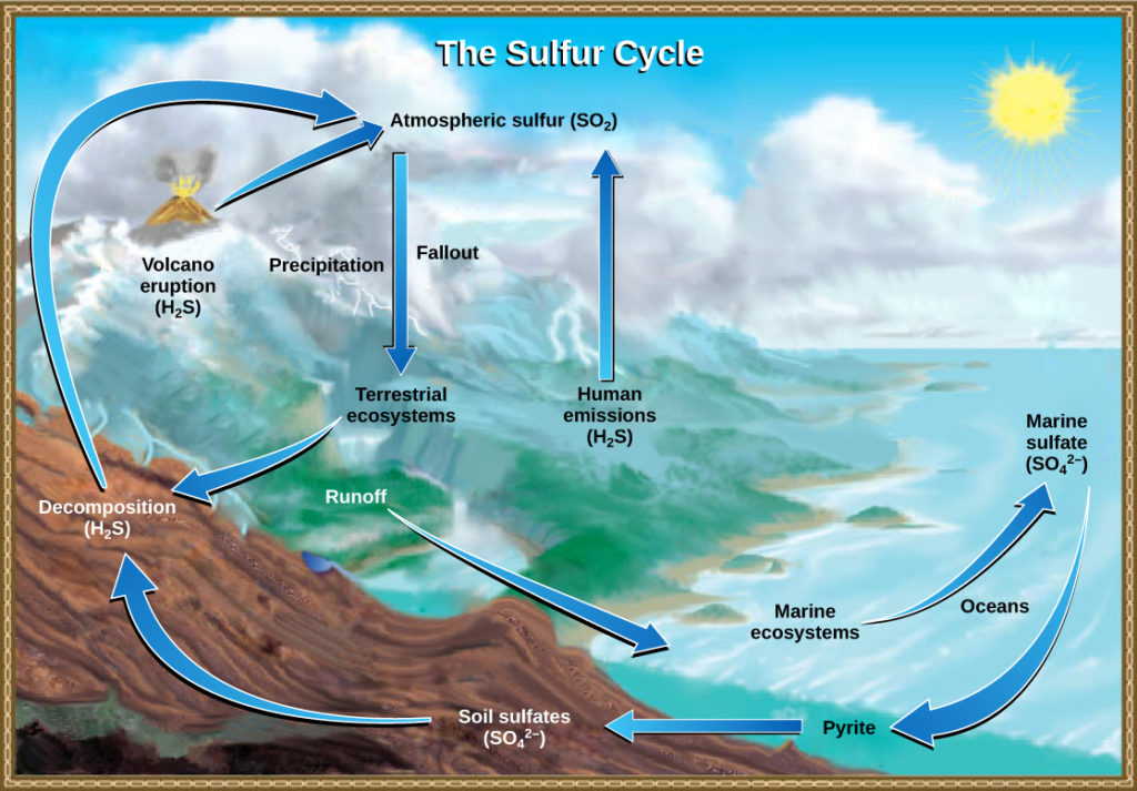 The Sulfur Cycle Biology for Majors II