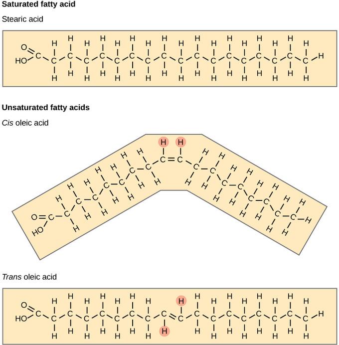 Lipids Boundless Chemistry