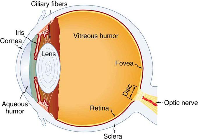 The Human Eye Boundless Physics