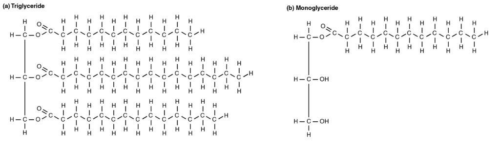 Diagram Of Lipid - Wiring Diagrams
