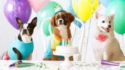 Small Of Dog Birthday Party