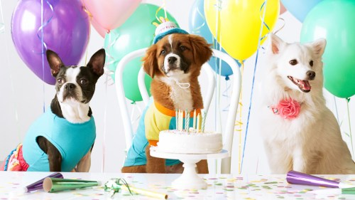 Medium Of Dog Birthday Party