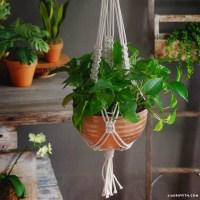 Braided Macrame Plant Holder - Lia Griffith