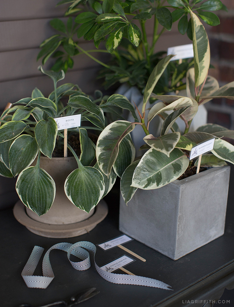 Keep Your Plants Happy With These Plant Markers - Lia Griffith