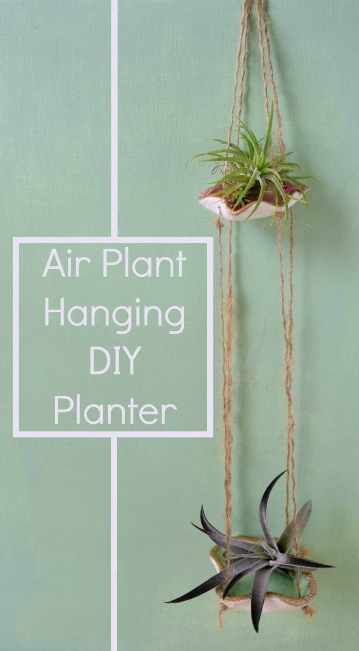 Air Plant Wall Holder Hanging Succulent Holder