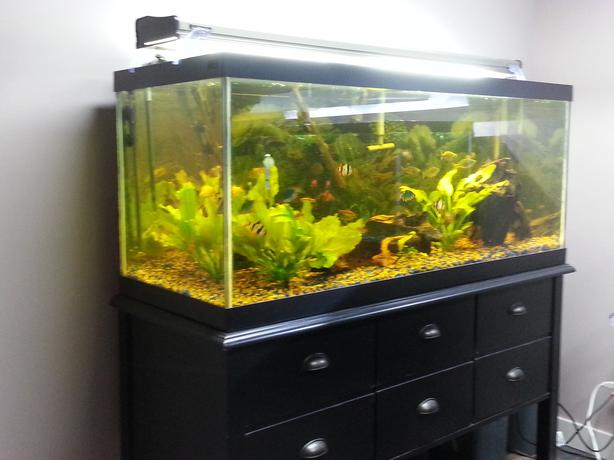500 Gallon Fish Tank Heater Bing Images