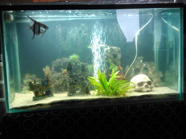 60 gal. fish tank. It comes with two Aqua Clear filters, one is a 70
