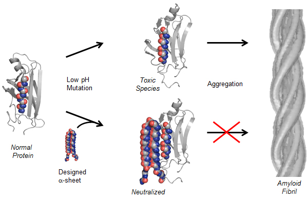 New protein structure could help treat Alzheimer\u0027s, related diseases
