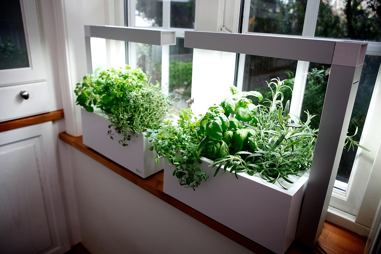 Herbs Pots Indoors How To Grow An Indoor Herb Garden Farm And Dairy