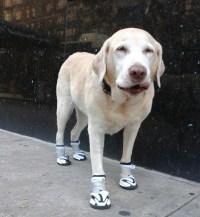 Orthopedic & Non Slip Shoes For Injuries, Arthritis ...