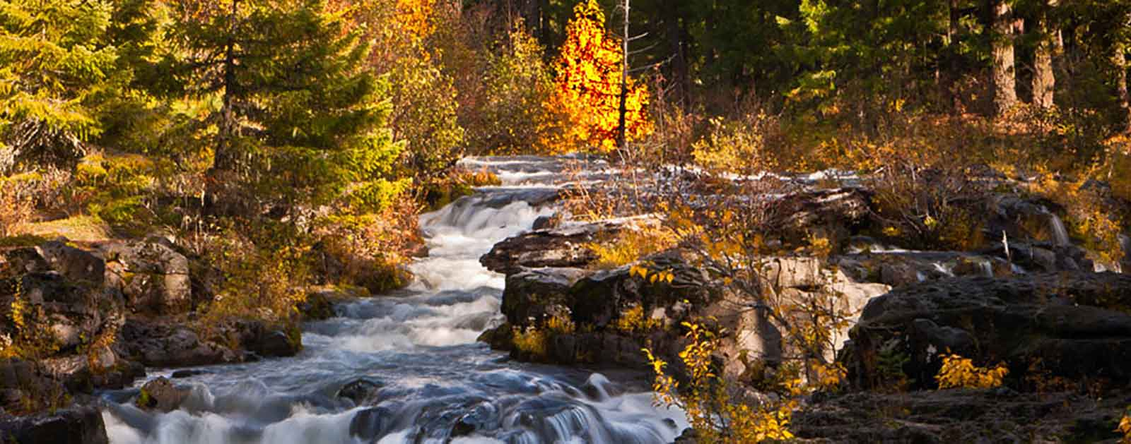 Birch Tree Fall Wallpaper Enjoying Fall Foliage By The River American Rivers