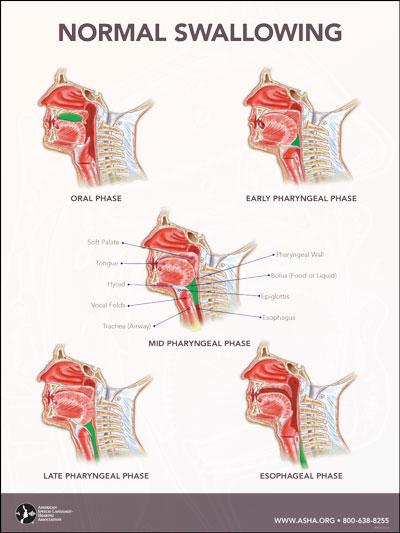 Swallow Wiring Diagram Wiring Diagrams