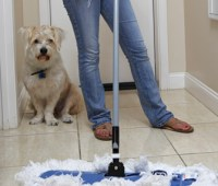 Avoid Accidents: How to Stop Your Dog Peeing in the House