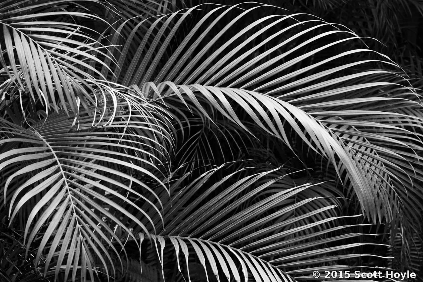 All Black Wallpaper Palms By Scott Hoyle Black Amp White Magazine For