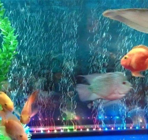 Aquarium Fish Tanks Underwater Submerse Nocturnal LED Lights Color
