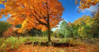 50 things to do this fall in Toronto
