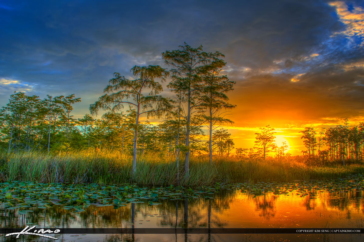 Free Fall Tree Wallpaper Florida Wetlands Sunset Cypress Tree Landscape