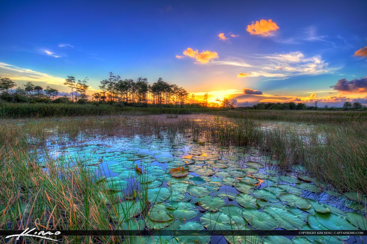 Havasu Falls Wallpaper Sunset Wetlands Florida Landscape Palm Beach Gardens