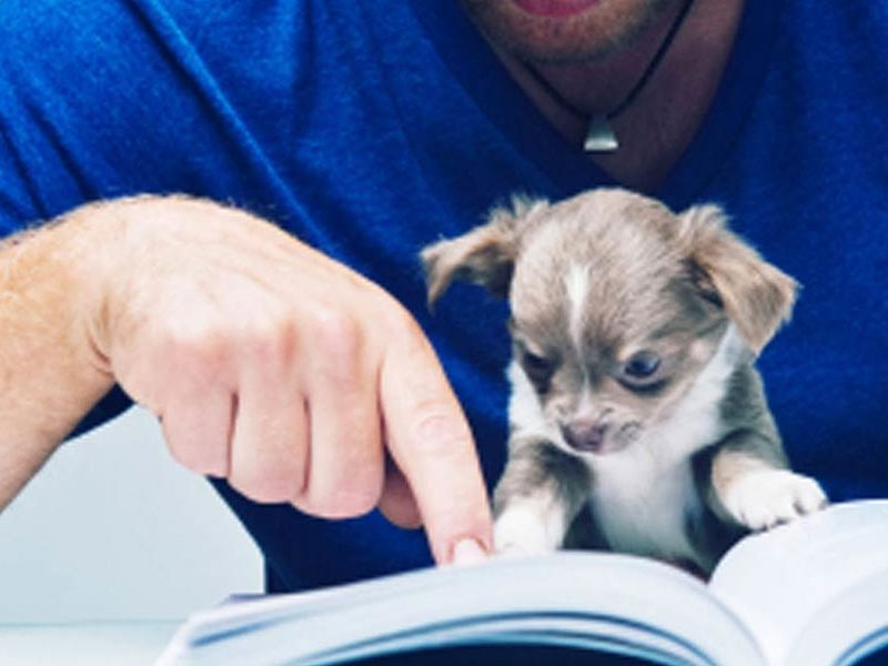 Office Dog for Hire \u2013 American Kennel Club