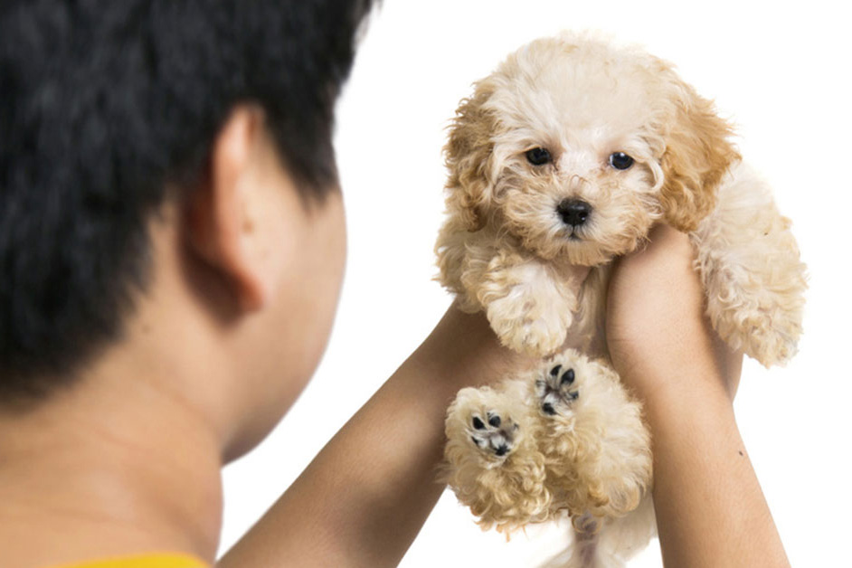 Preparing a Contract for Puppy Buyers \u2013 American Kennel Club